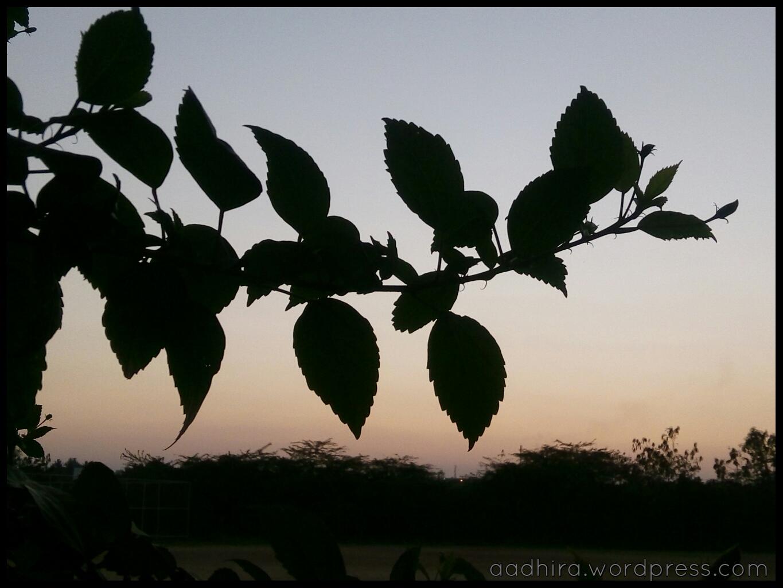 Silhouette_leaves.jpeg