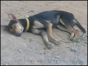 Dog sleeping on dust