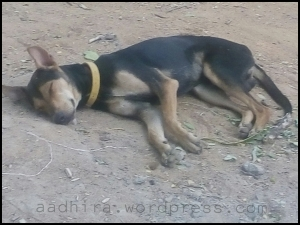 Dog sleeping on dust